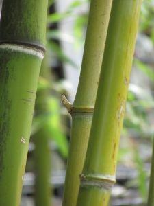 Bamboo Wood Flooring Vs. Oak Wood Flooring